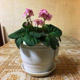 Комнатные растения - Фиалка, 0