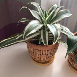 Комнатные растения - Цветок , 0