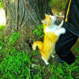 Кошки - Очень красивые котик и кошка ищут дом!🏰 , 0