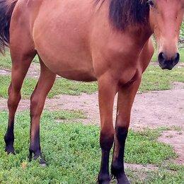 Лошади - Молодая лошадь 1,5года, 0