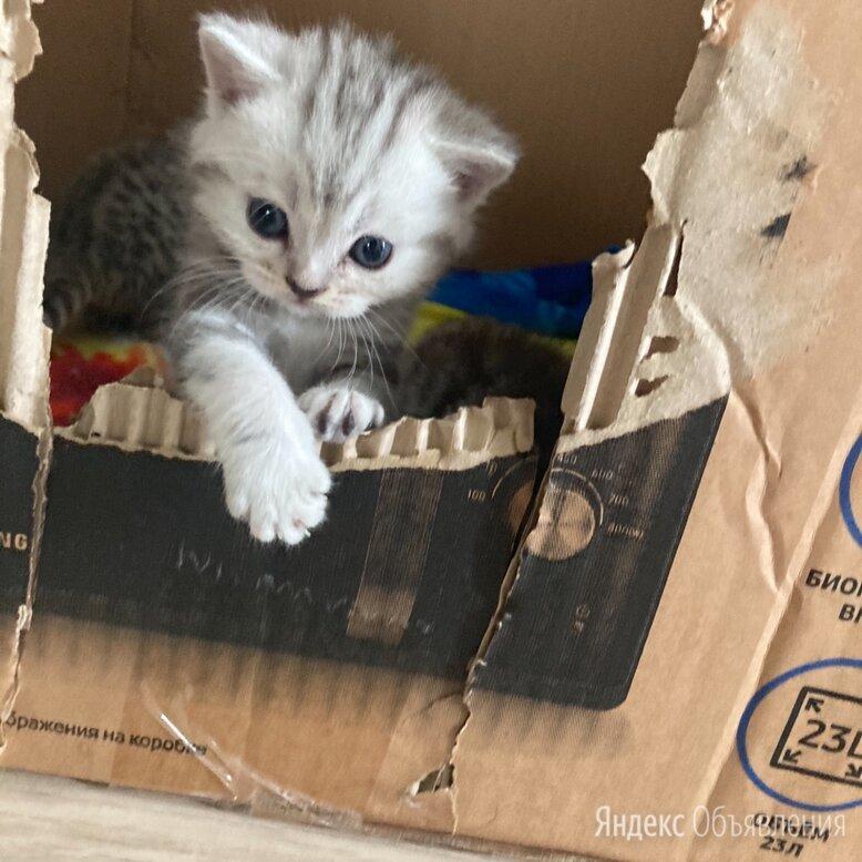 Кошки по цене 2000₽ - Кошки, фото 0