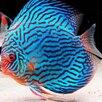 Аквариумные рыбки по цене 30₽ - Аквариумные рыбки, фото 6