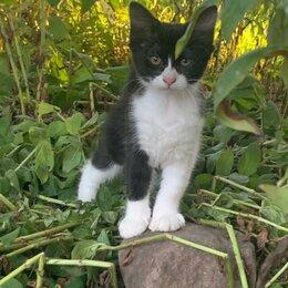 Кошки - Котенок девочка в дар, 0