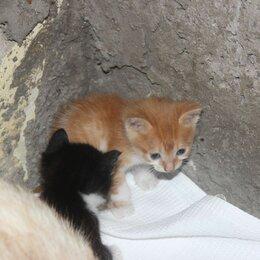 Кошки - отдаем даром, 4 котёнка , 0