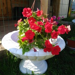 Садовые фигуры и цветочницы - Вазон уличный  из бетона, 0