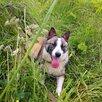 Мона, озорная и позитивная, 1 год по цене даром - Собаки, фото 7