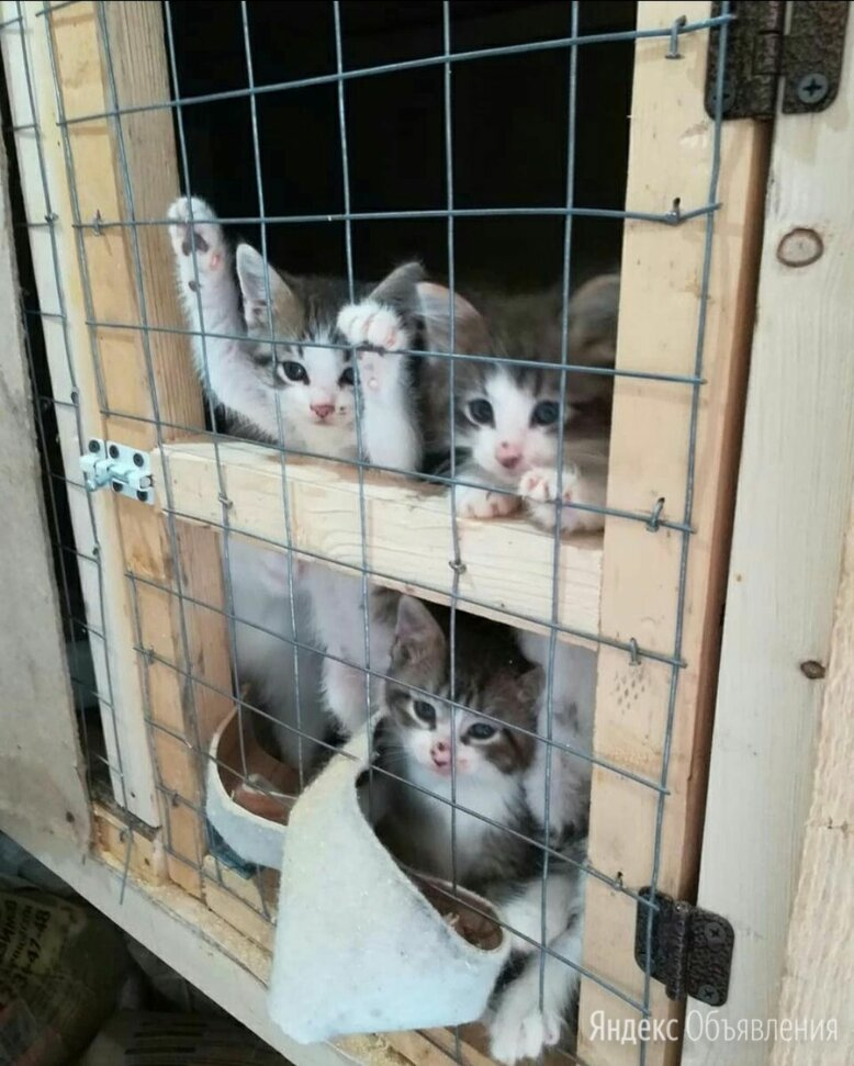 Пушистики в приюте  по цене даром - Кошки, фото 0