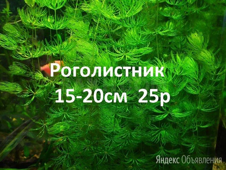 Аквариумные растения. по цене 25₽ - Растения для аквариумов и террариумов, фото 0