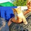 Животное по цене даром - Кошки, фото 6