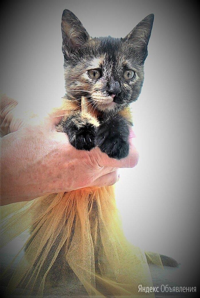 Котенок Суок по цене 1₽ - Кошки, фото 0