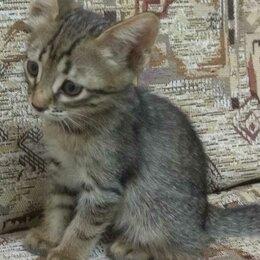 Животные - Два милых котенка ищут хозяев , 0