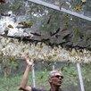 Высоко рентабельный бизнес ферма Живых Бабочек Pro по цене 59999₽ - Сельское хозяйство, фото 5