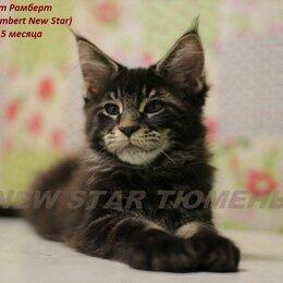 Кошки - Великолепные котята породы мейн кун, 0