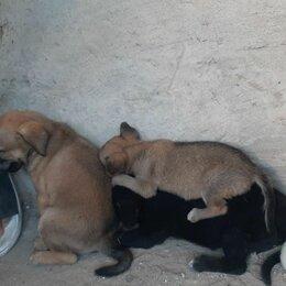 Собаки - Любимые животные, 0