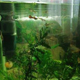 Аквариумные рыбки - Гуппи, 0