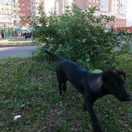 Животные - Брошен щенок, 0