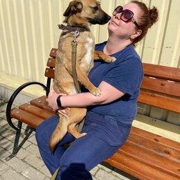 Собаки - Маленькая собачка бесплатно в добрые руки , 0