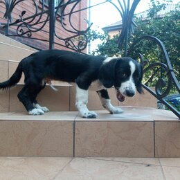 Собаки - Найдена собака, 0
