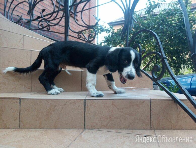 Найдена собака по цене даром - Собаки, фото 0