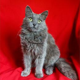 Кошки - Котик дымчатого цвета ищет свою семью, 0