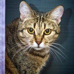 Кошки - Некрасивая кошка ищет дом и семью. , 0