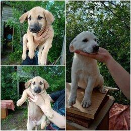 Собаки - Щенки, девочки, 3 месяца , 0