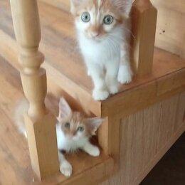 Кошки - РЫЖИКИ В ДАР), 0
