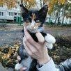 Котята в добрые руки  по цене даром - Кошки, фото 8