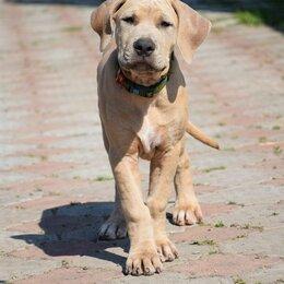 Собаки - Предлагаются к продаже щенки прайтера , 0