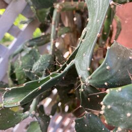 Комнатные растения - Кактус бесплатно , 0