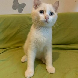 Кошки - Котенок Фишка, 4 месяца, 0