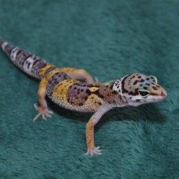 Рептилии - Эублефар, 0