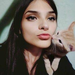 Кошки - Персиковые котята, 0