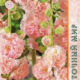 Семена - Шток-роза Персиковая Мечта (Агрос), 0