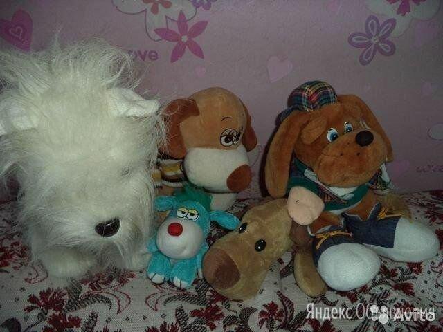 Продаю игрушечных собак по цене не указана - Мягкие игрушки, фото 0