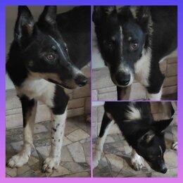 Собаки - Красавица Лисичка в добрые руки (привита, стерилизована, с паспортом)), 0