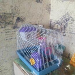 Клетки и домики  - Petmax клетка для мелких грызунов gino 34х23.5х29 см с аксессуарамир, 0