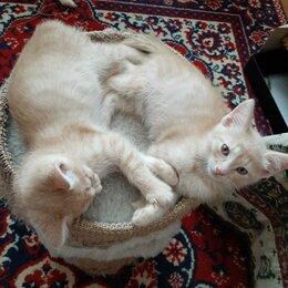 Кошки - Кошечка и три котика в дар добрым и заботливым, 0