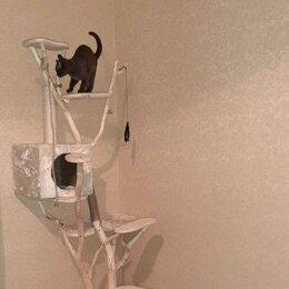 Когтеточки и комплексы  - Кошкин дом. Игровой комплекс для кошки, 0