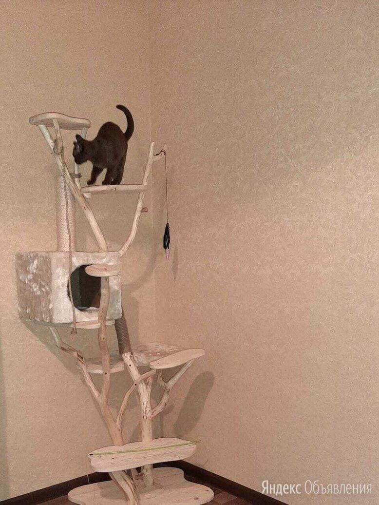 Кошкин дом. Игровой комплекс для кошки по цене 5500₽ - Когтеточки и комплексы , фото 0
