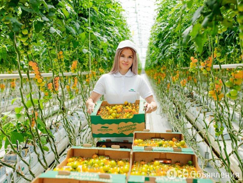 Работник на уборку овощей вахта - Рабочие, фото 0