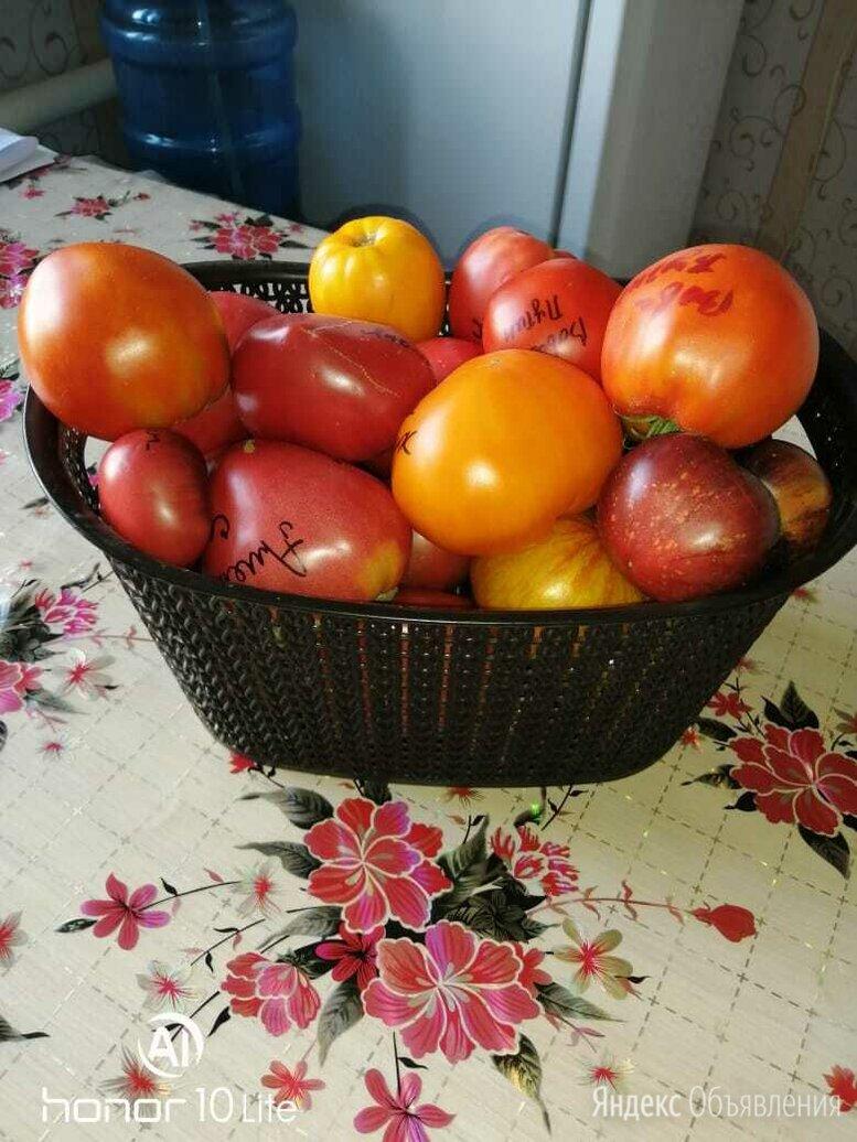 Семена по цене 3₽ - Семена, фото 0