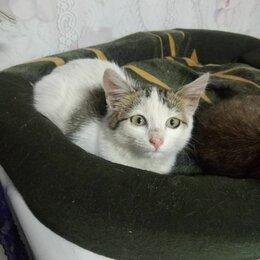 Кошки - Котенок 2 мес, 0
