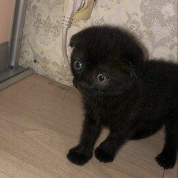 Кошки - Шотландские вислоухие котята белый и черный с голубыми глазами, 0