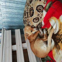 Животные - Найдена собака, ищет хозяина , 0