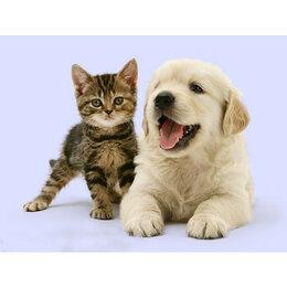 Игрушки-антистресс - Щенок и котенок Артикул : XA 2267, 0