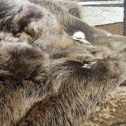 Рога, шкуры, чучела животных - Шкура медведя (имитация), 0