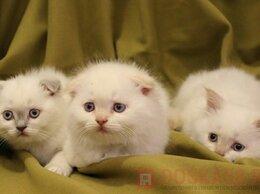 Кошки - шалунишки, 0