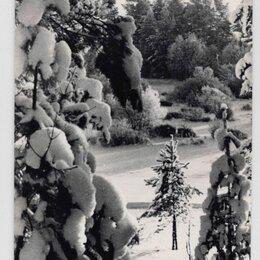 Открытки - Открытка СССР Русская зима 1966 Пахомов чистая снежный лес сосна ель снег, 0