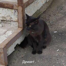 Животные -  Черный ласковый кот. 1год мышелов, 0